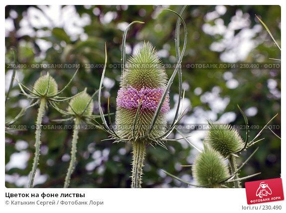 Цветок на фоне листвы, фото № 230490, снято 15 июля 2007 г. (c) Катыкин Сергей / Фотобанк Лори