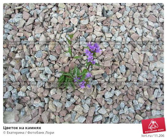 Купить «Цветок на камнях», фото № 11206, снято 11 июня 2006 г. (c) Екатерина / Фотобанк Лори