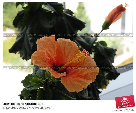 Цветок на подоконнике, фото № 320226, снято 13 мая 2008 г. (c) Эдуард Цветков / Фотобанк Лори