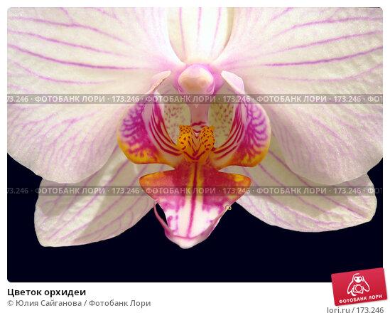 Цветок орхидеи, фото № 173246, снято 8 января 2008 г. (c) Юлия Сайганова / Фотобанк Лори