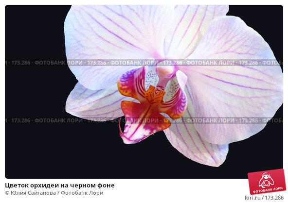 Цветок орхидеи на черном фоне, фото № 173286, снято 8 января 2008 г. (c) Юлия Сайганова / Фотобанк Лори