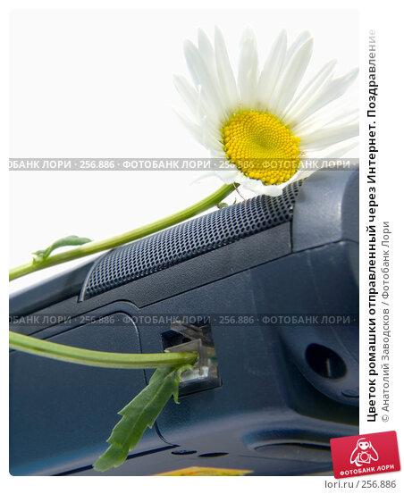 Цветок ромашки отправленный через Интернет. Поздравление, фото № 256886, снято 12 июня 2006 г. (c) Анатолий Заводсков / Фотобанк Лори