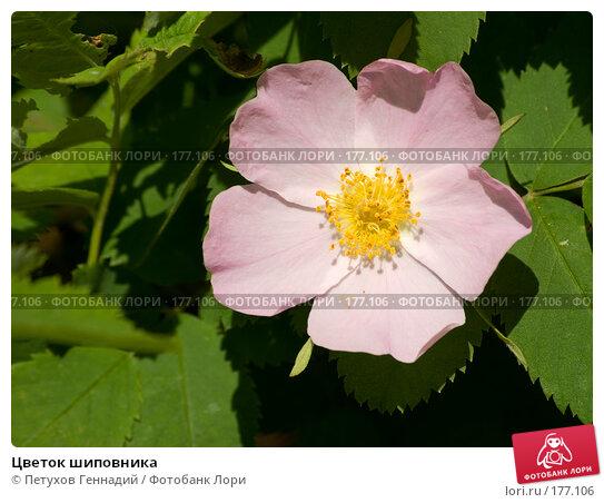 Цветок шиповника, фото № 177106, снято 26 мая 2007 г. (c) Петухов Геннадий / Фотобанк Лори
