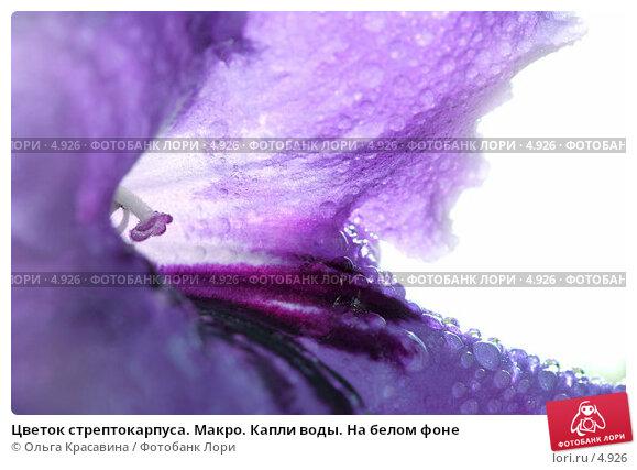 Цветок стрептокарпуса. Макро. Капли воды. На белом фоне, фото № 4926, снято 29 апреля 2017 г. (c) Ольга Красавина / Фотобанк Лори