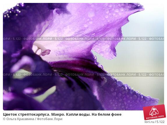 Цветок стрептокарпуса. Макро. Капли воды. На белом фоне, фото № 5122, снято 13 июня 2006 г. (c) Ольга Красавина / Фотобанк Лори