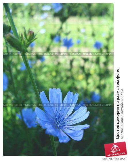 Купить «Цветок цикория на размытом фоне», фото № 144854, снято 25 июля 2007 г. (c) Kribli-Krabli / Фотобанк Лори