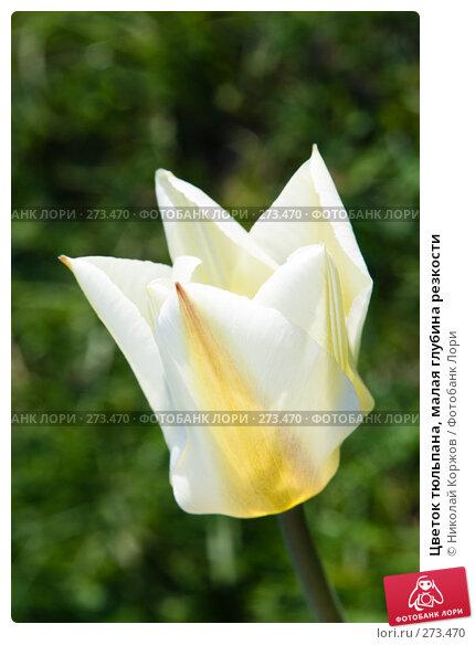 Цветок тюльпана, малая глубина резкости, фото № 273470, снято 3 апреля 2008 г. (c) Николай Коржов / Фотобанк Лори