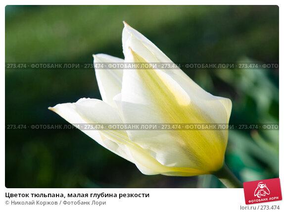 Цветок тюльпана, малая глубина резкости, фото № 273474, снято 3 апреля 2008 г. (c) Николай Коржов / Фотобанк Лори