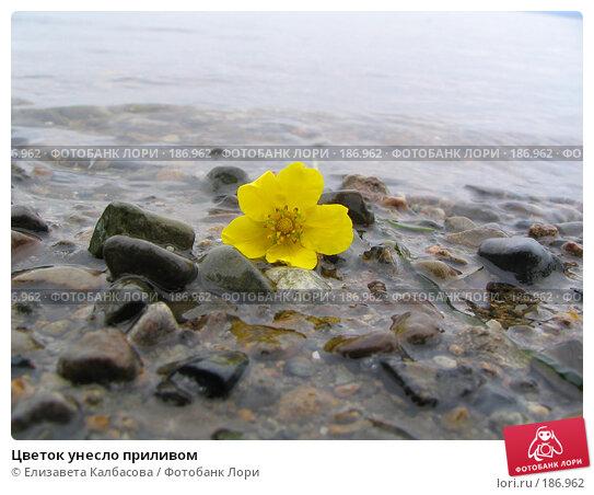 Цветок унесло приливом, фото № 186962, снято 13 июня 2005 г. (c) Елизавета Калбасова / Фотобанк Лори