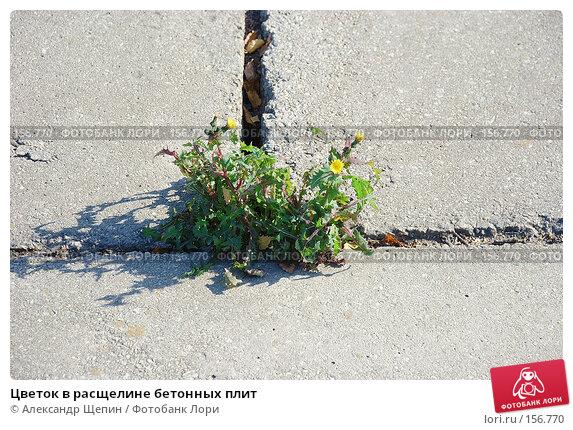Купить «Цветок в расщелине бетонных плит», эксклюзивное фото № 156770, снято 3 октября 2007 г. (c) Александр Щепин / Фотобанк Лори