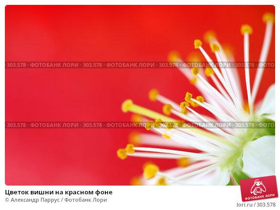 Цветок вишни на красном фоне, фото № 303578, снято 21 апреля 2008 г. (c) Александр Паррус / Фотобанк Лори