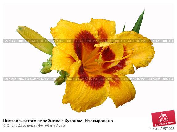 Купить «Цветок желтого лилейника с бутоном. Изолировано.», фото № 257098, снято 19 июля 2005 г. (c) Ольга Дроздова / Фотобанк Лори