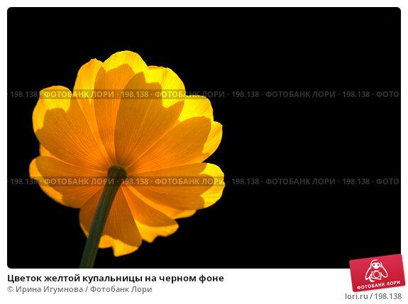 Цветок желтой купальницы на черном фоне, фото № 198138, снято 13 июля 2007 г. (c) Ирина Игумнова / Фотобанк Лори