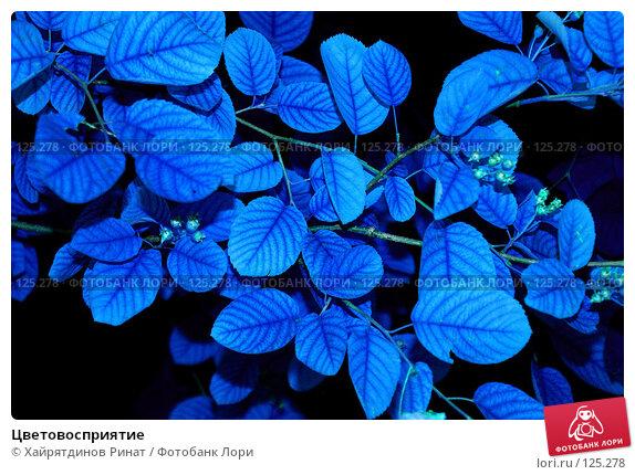 Цветовосприятие, фото № 125278, снято 27 июня 2007 г. (c) Хайрятдинов Ринат / Фотобанк Лори