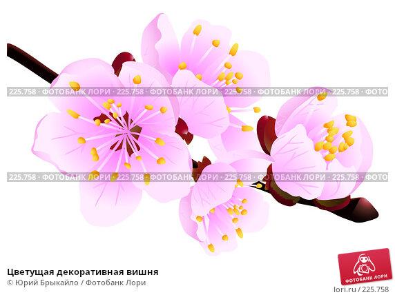 Цветущая декоративная вишня, иллюстрация № 225758 (c) Юрий Брыкайло / Фотобанк Лори