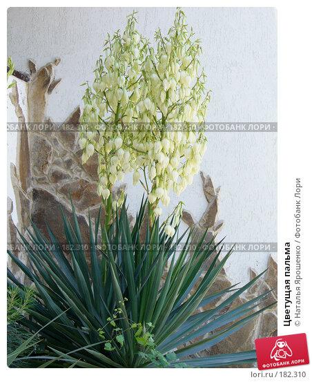 Цветущая пальма, фото № 182310, снято 8 июня 2007 г. (c) Наталья Ярошенко / Фотобанк Лори