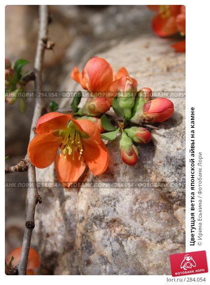 Цветущая ветка японской айвы на камне, фото № 284054, снято 10 мая 2008 г. (c) Ирина Еськина / Фотобанк Лори