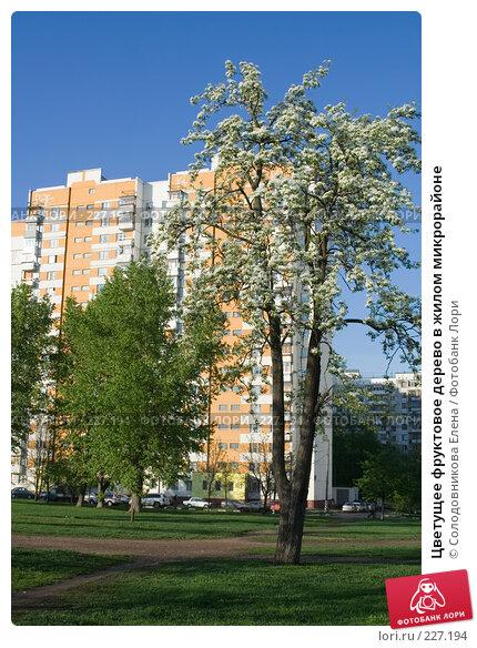 Купить «Цветущее фруктовое дерево в жилом микрорайоне», фото № 227194, снято 13 мая 2007 г. (c) Солодовникова Елена / Фотобанк Лори