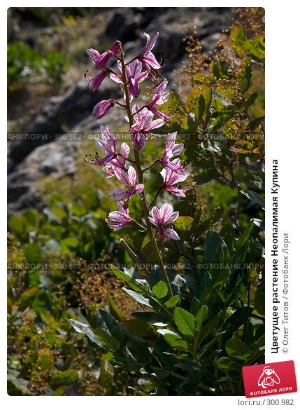 Цветущее растение Неопалимая Купина, фото № 300982, снято 21 мая 2008 г. (c) Олег Титов / Фотобанк Лори
