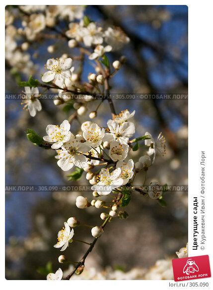 Купить «Цветущие сады», фото № 305090, снято 26 апреля 2008 г. (c) Куракевич Иван / Фотобанк Лори