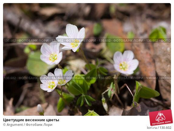 Купить «Цветущие весенние цветы», фото № 130602, снято 7 мая 2007 г. (c) Argument / Фотобанк Лори