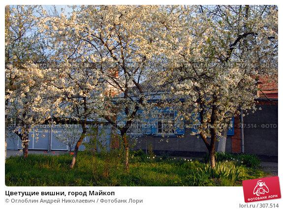 Цветущие вишни, город Майкоп, фото № 307514, снято 30 марта 2017 г. (c) Оглоблин Андрей Николаевич / Фотобанк Лори
