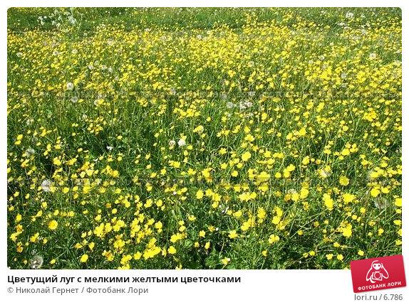 Цветущий луг с мелкими желтыми цветочками, фото № 6786, снято 17 июня 2006 г. (c) Николай Гернет / Фотобанк Лори