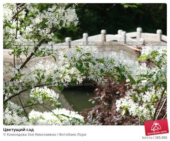 Цветущий сад, фото № 285890, снято 2 мая 2005 г. (c) Комоедова Зоя Николаевна / Фотобанк Лори