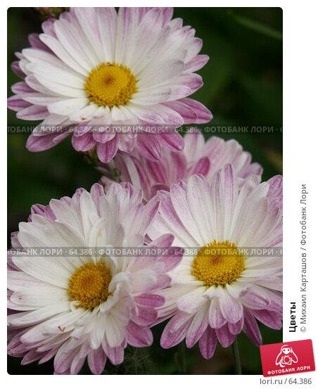 Цветы, эксклюзивное фото № 64386, снято 14 августа 2005 г. (c) Михаил Карташов / Фотобанк Лори