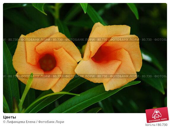 Купить «Цветы», фото № 80730, снято 20 августа 2007 г. (c) Лифанцева Елена / Фотобанк Лори