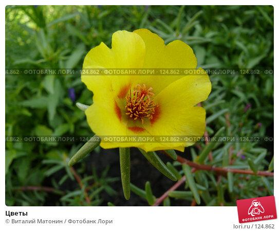 Цветы, фото № 124862, снято 26 июля 2007 г. (c) Виталий Матонин / Фотобанк Лори