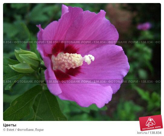 Цветы, фото № 138834, снято 5 июля 2007 г. (c) Estet / Фотобанк Лори