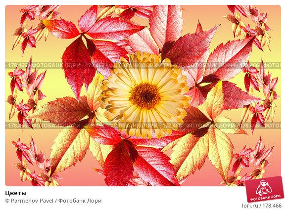 Цветы, фото № 178466, снято 2 января 2008 г. (c) Parmenov Pavel / Фотобанк Лори