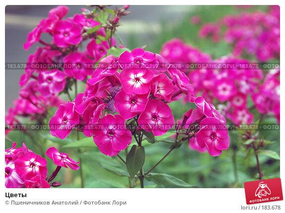 Цветы, фото № 183678, снято 30 июля 2006 г. (c) Пшеничников Анатолий / Фотобанк Лори