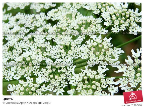 Цветы, фото № 196586, снято 22 июля 2006 г. (c) Светлана Архи / Фотобанк Лори