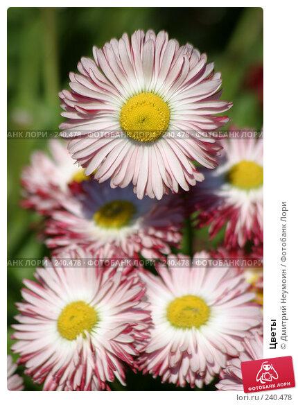 Цветы, эксклюзивное фото № 240478, снято 15 мая 2005 г. (c) Дмитрий Неумоин / Фотобанк Лори
