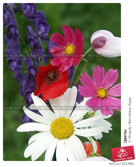 Цветы, фото № 323994, снято 3 августа 2005 г. (c) VPutnik / Фотобанк Лори