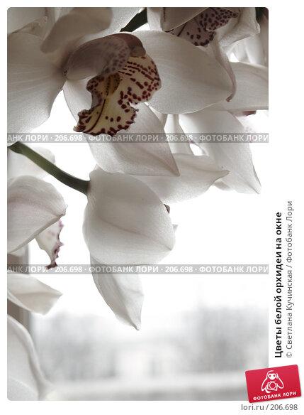 Купить «Цветы белой орхидеи на окне», фото № 206698, снято 20 апреля 2018 г. (c) Светлана Кучинская / Фотобанк Лори