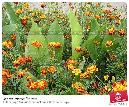 Цветы города Почепа, фото № 36542, снято 21 августа 2017 г. (c) Элеонора Лукина (GenuineLera) / Фотобанк Лори