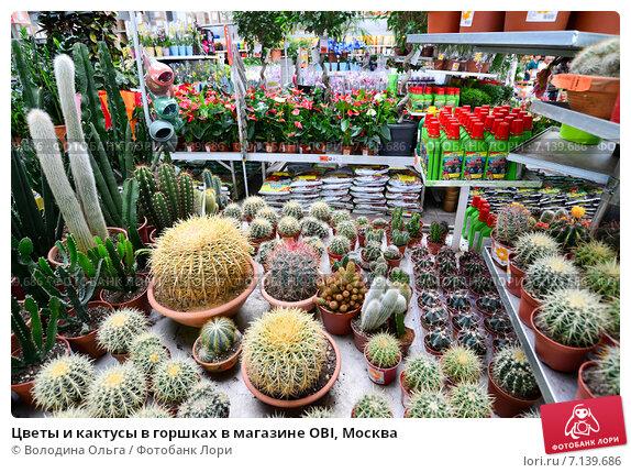 Дом цветов  Интернетмагазин комнатных растений и цветов