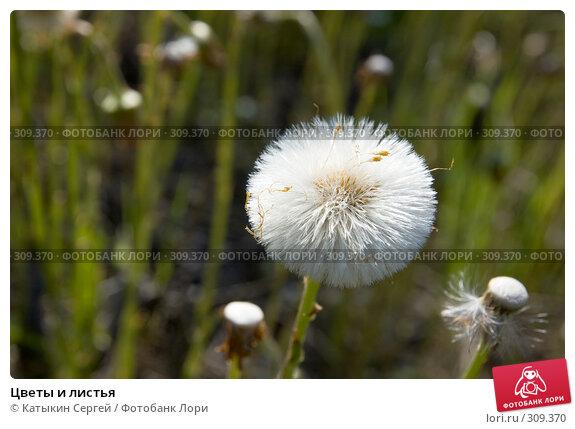 Купить «Цветы и листья», фото № 309370, снято 17 мая 2008 г. (c) Катыкин Сергей / Фотобанк Лори