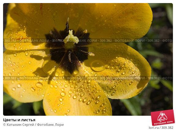 Цветы и листья, фото № 309382, снято 17 мая 2008 г. (c) Катыкин Сергей / Фотобанк Лори