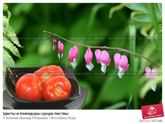 Цветы и помидоры среди листвы, фото № 331046, снято 20 июня 2008 г. (c) Коннов Леонид Петрович / Фотобанк Лори