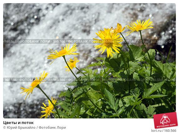 Цветы и поток, фото № 160566, снято 29 июня 2007 г. (c) Юрий Брыкайло / Фотобанк Лори