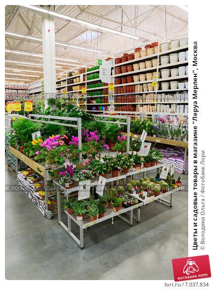 Купить цветы в леруа мерлен москва купить цветы улечные
