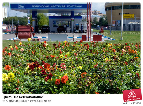Цветы на бензоколонке, фото № 72666, снято 27 июля 2007 г. (c) Юрий Синицын / Фотобанк Лори