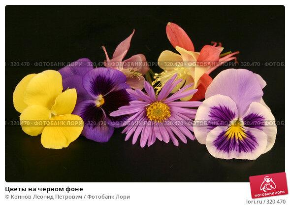 Цветы на черном фоне, фото № 320470, снято 11 июня 2008 г. (c) Коннов Леонид Петрович / Фотобанк Лори