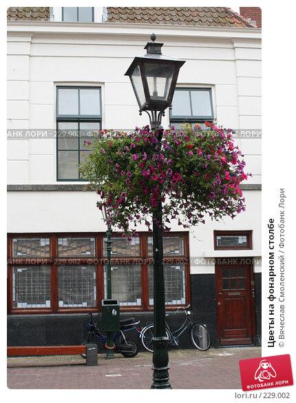 Купить «Цветы на фонарном столбе», фото № 229002, снято 26 июня 2007 г. (c) Вячеслав Смоленский / Фотобанк Лори