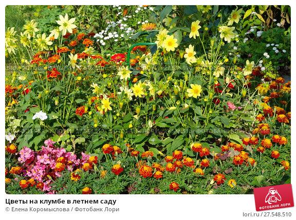 Купить «Цветы на клумбе в летнем саду», эксклюзивное фото № 27548510, снято 20 августа 2017 г. (c) Елена Коромыслова / Фотобанк Лори