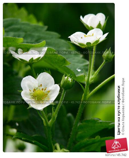 Цветы на кусте клубники, фото № 45742, снято 15 июня 2006 г. (c) Ольга Хорькова / Фотобанк Лори